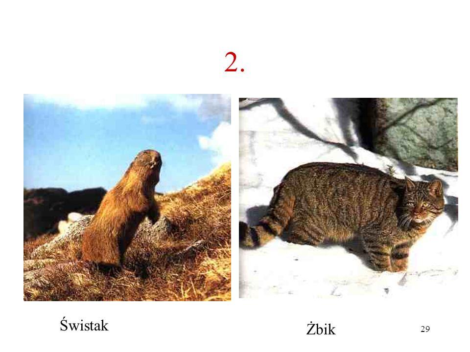28 2. Jakie to zwierzę? A B