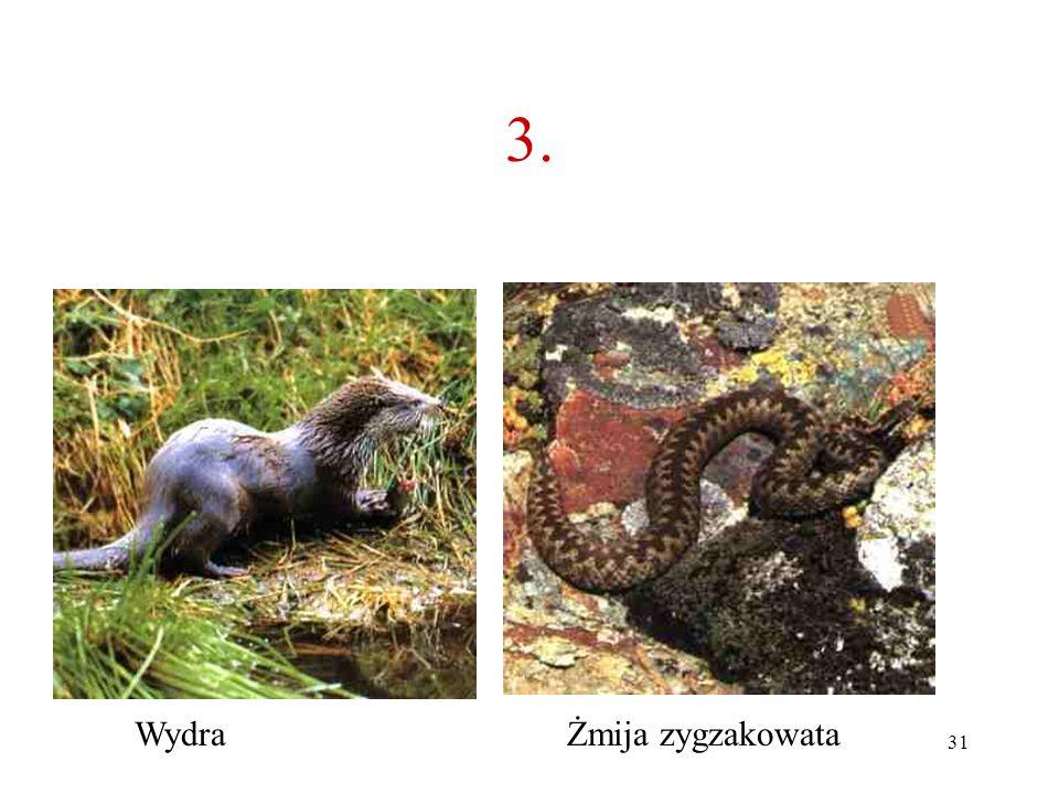 30 3. Jakie to zwierzę? A B