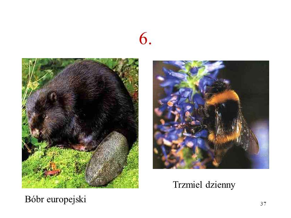 36 B A 6. Jakie to zwierzę?