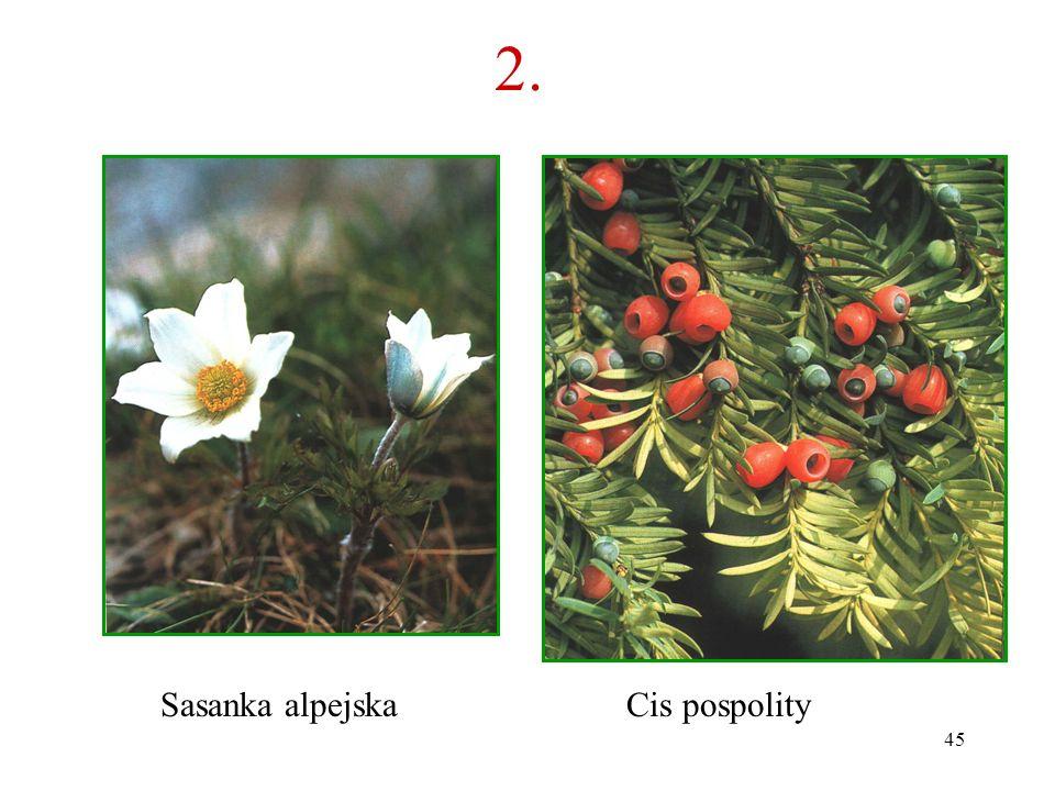 44 2. Co to za roślina? B A