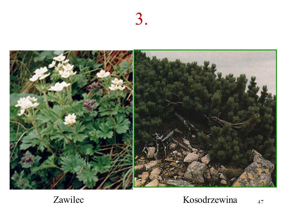 46 3. Co to za roślina? A B