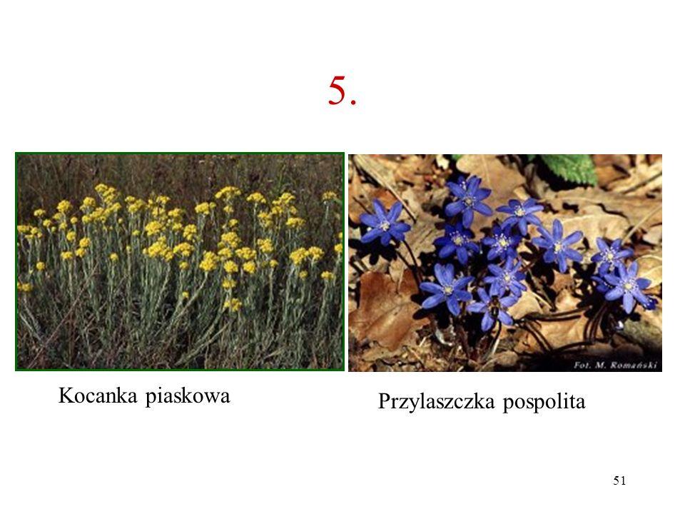 50 5. Co to za roślina? A B