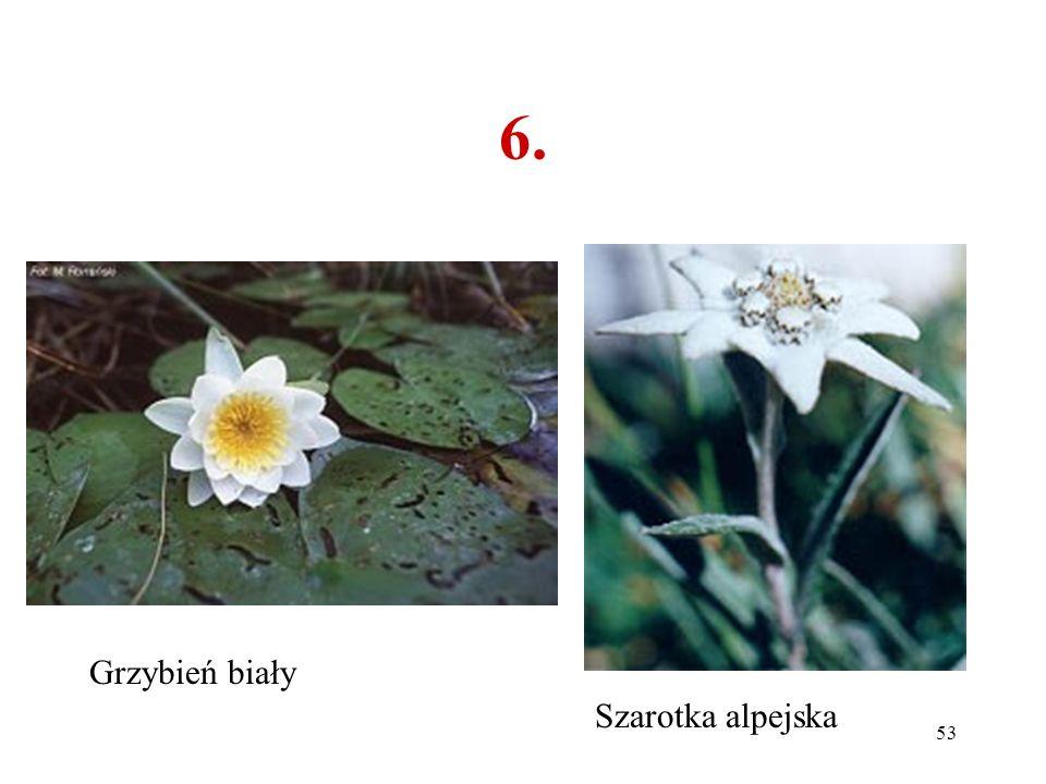 52 6. Co to za roślina? A B