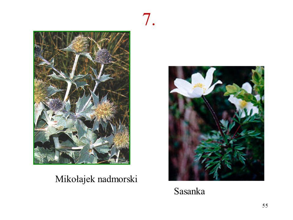 54 7. Co to za roślina? B A