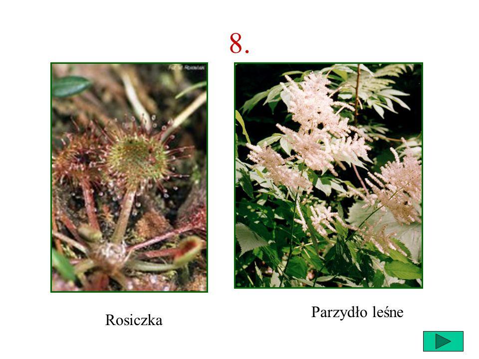 56 8. Co to za roślina? B A