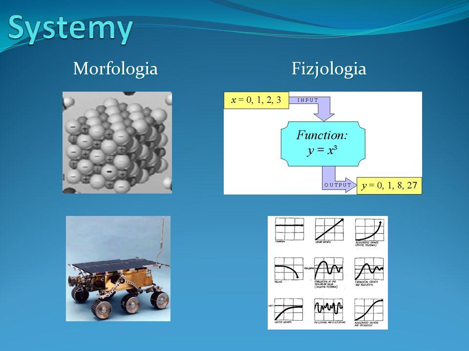 Morfologia Fizjologia Morfologia Fizjologia