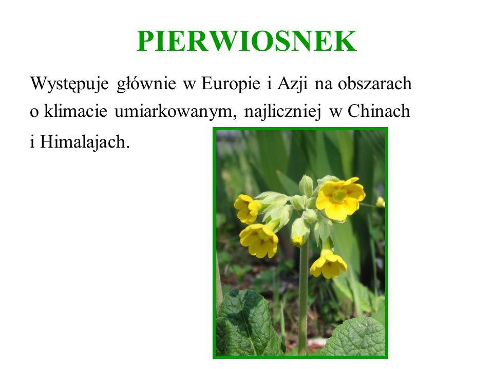 PIERWIOSNEK Występuje głównie w Europie i Azji na obszarach o klimacie umiarkowanym, najliczniej w Chinach i Himalajach.