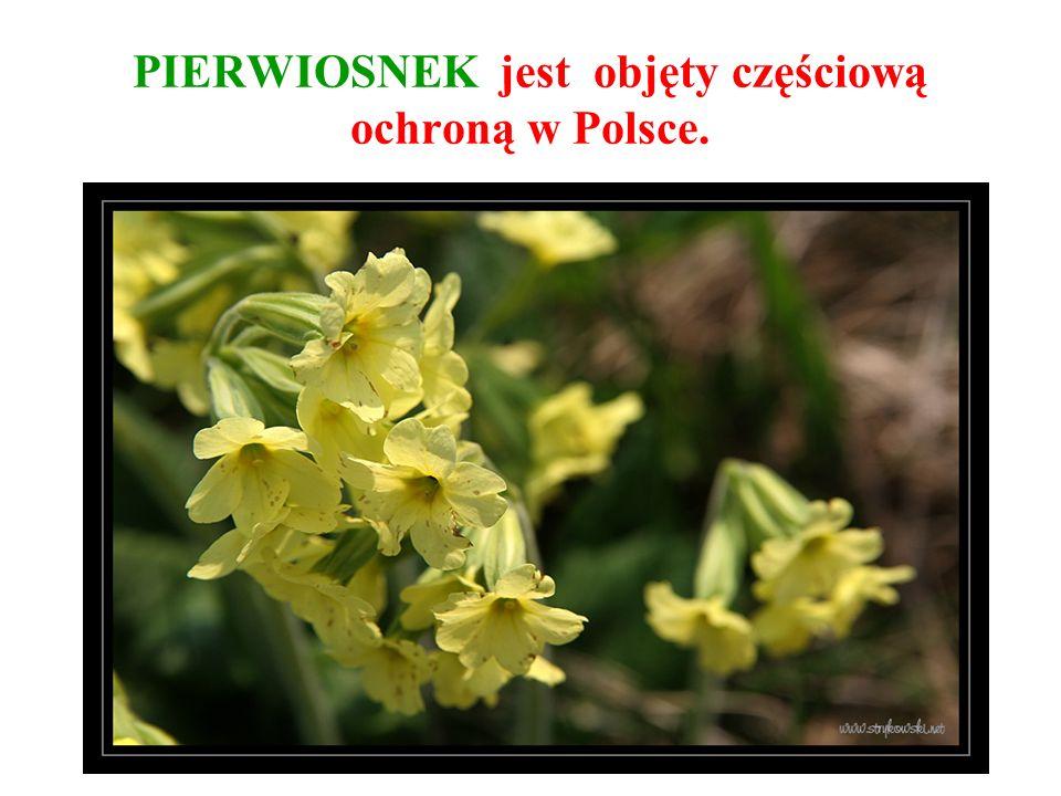 PIERWIOSNEK jest objęty częściową ochroną w Polsce.