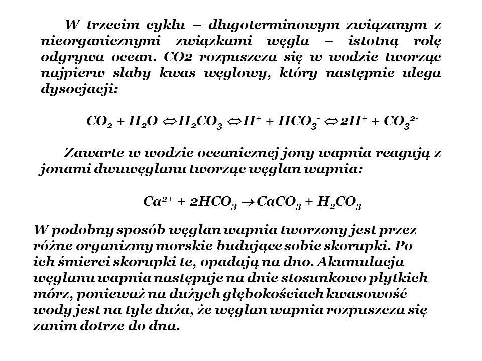 W trzecim cyklu – długoterminowym związanym z nieorganicznymi związkami węgla – istotną rolę odgrywa ocean. CO2 rozpuszcza się w wodzie tworząc najpie