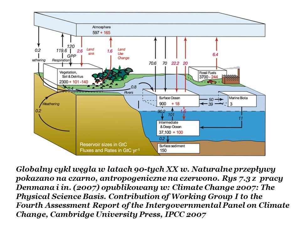 Globalny cykl węgla w latach 90-tych XX w. Naturalne przepływy pokazano na czarno, antropogeniczne na czerwono. Rys 7.3 z pracy Denmana i in. (2007) o