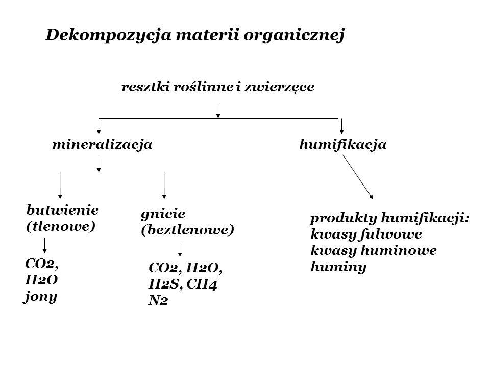 Dekompozycja materii organicznej resztki roślinne i zwierzęce mineralizacjahumifikacja butwienie (tlenowe) CO2, H2O jony gnicie (beztlenowe) CO2, H2O,