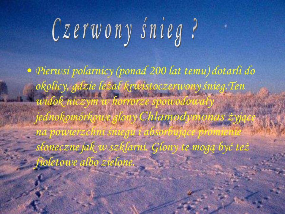 Pierwsi polarnicy (ponad 200 lat temu) dotarli do okolicy, gdzie leżał krwistoczerwony śnieg.Ten widok niczym w horrorze spowodowały jednokomórkowe gl