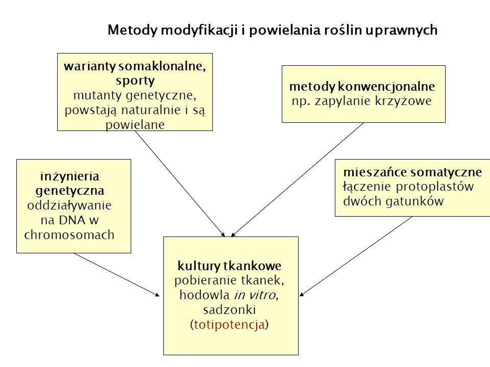 warianty somaklonalne, sporty mutanty genetyczne, powstają naturalnie i są powielane metody konwencjonalne np.