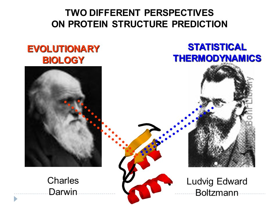 Ludvig Edward Boltzmann Charles Darwin EVOLUTIONARY BIOLOGY STATISTICAL THERMODYNAMICS TWO DIFFERENT PERSPECTIVES ON PROTEIN STRUCTURE PREDICTION