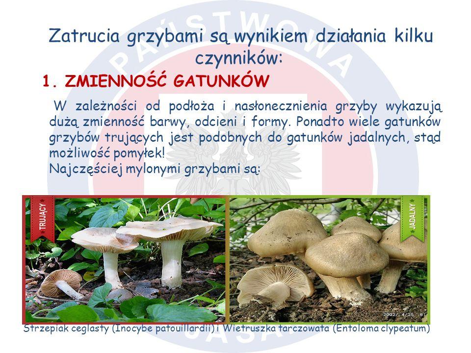 Zatrucia grzybami są wynikiem działania kilku czynników: 1.ZMIENNOŚĆ GATUNKÓW W zależności od podłoża i nasłonecznienia grzyby wykazują dużą zmienność