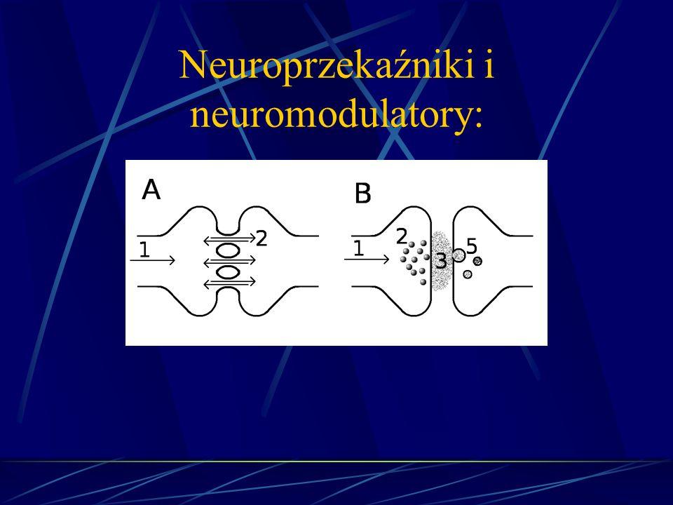 Neuroprzekaźniki i neuromodulatory: