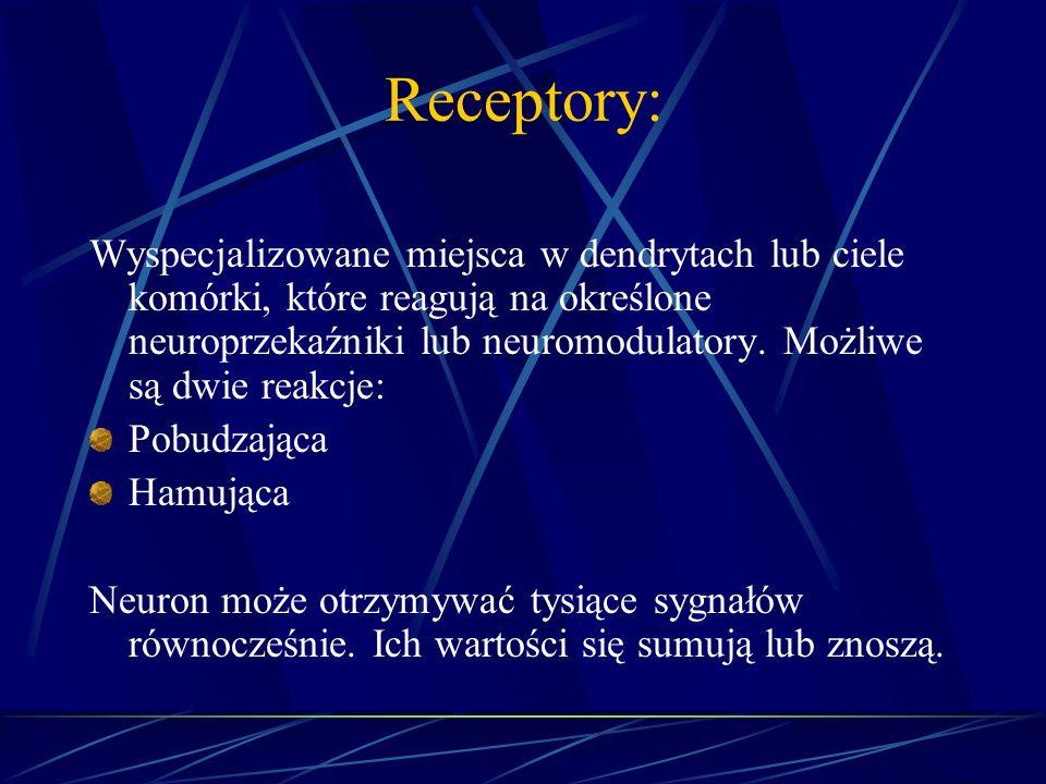 Receptory: Wyspecjalizowane miejsca w dendrytach lub ciele komórki, które reagują na określone neuroprzekaźniki lub neuromodulatory. Możliwe są dwie r