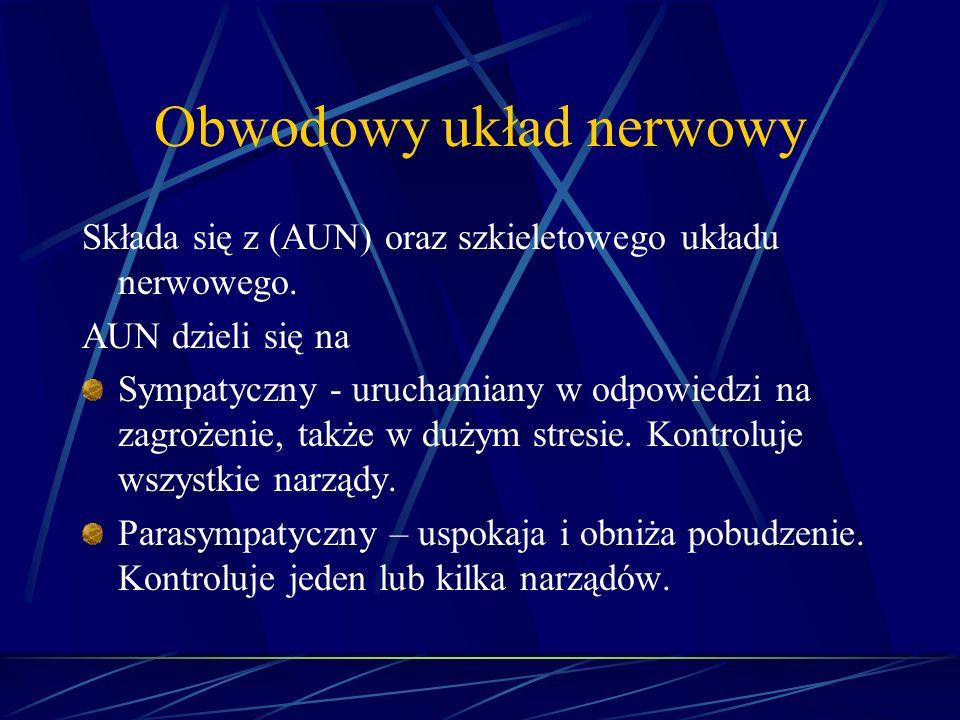Obwodowy układ nerwowy Składa się z (AUN) oraz szkieletowego układu nerwowego. AUN dzieli się na Sympatyczny - uruchamiany w odpowiedzi na zagrożenie,