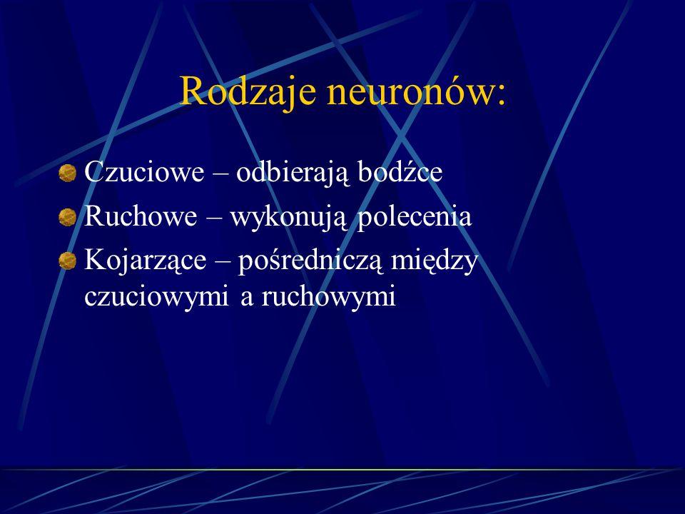 Rodzaje neuronów: Czuciowe – odbierają bodźce Ruchowe – wykonują polecenia Kojarzące – pośredniczą między czuciowymi a ruchowymi