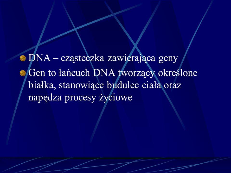 DNA – cząsteczka zawierająca geny Gen to łańcuch DNA tworzący określone białka, stanowiące budulec ciała oraz napędza procesy życiowe