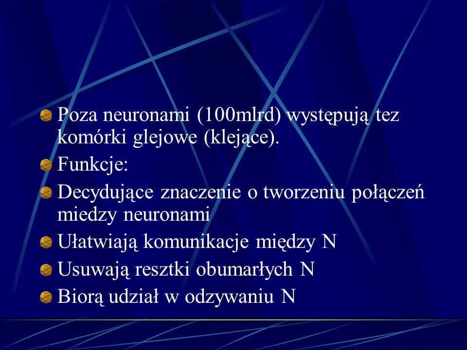 Poza neuronami (100mlrd) występują tez komórki glejowe (klejące). Funkcje: Decydujące znaczenie o tworzeniu połączeń miedzy neuronami Ułatwiają komuni
