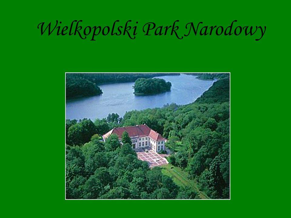 Informacje ogólne Wielkopolski Park Narodowy utworzony został na mocy rozporządzenia Rady Ministrów z dnia 16 kwietnia 1957 roku.