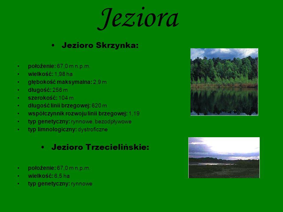 Jeziora Jezioro Wielkowiejskie: położenie: 70,9 m n.p.m.