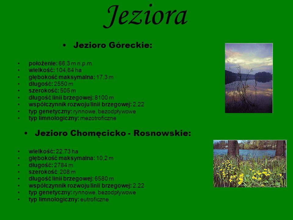 Jeziora Jezioro Budzyńskie : położenie: 61,4 m n.p.m.