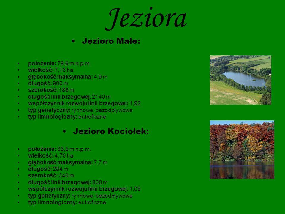 Jeziora Jezioro Skrzynka: położenie: 67,0 m n.p.m.