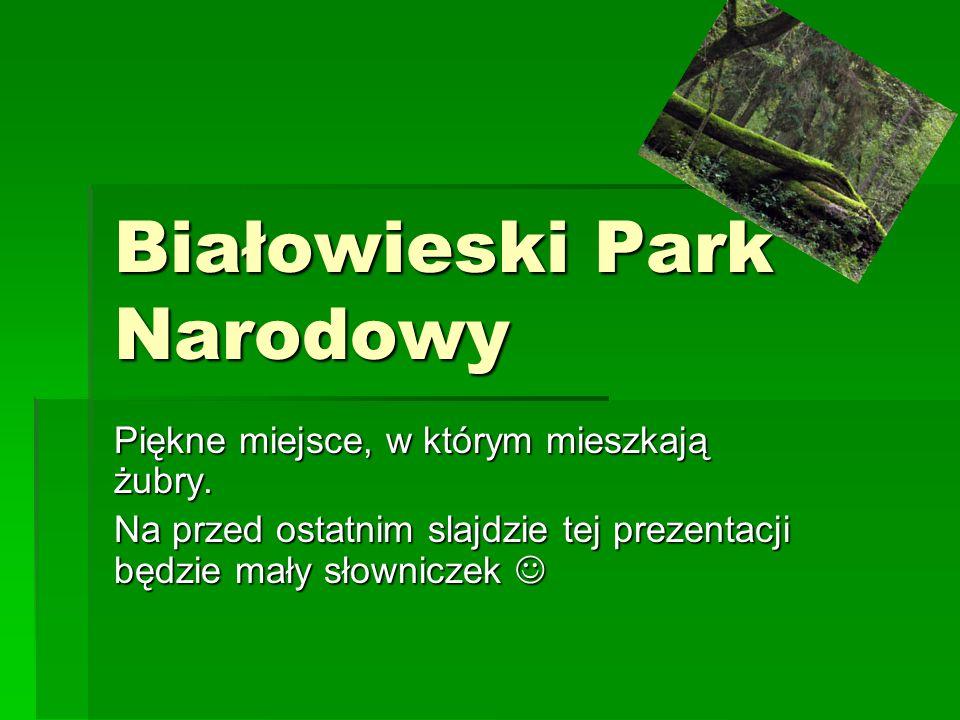 Białowieski Park Narodowy Piękne miejsce, w którym mieszkają żubry. Na przed ostatnim slajdzie tej prezentacji będzie mały słowniczek