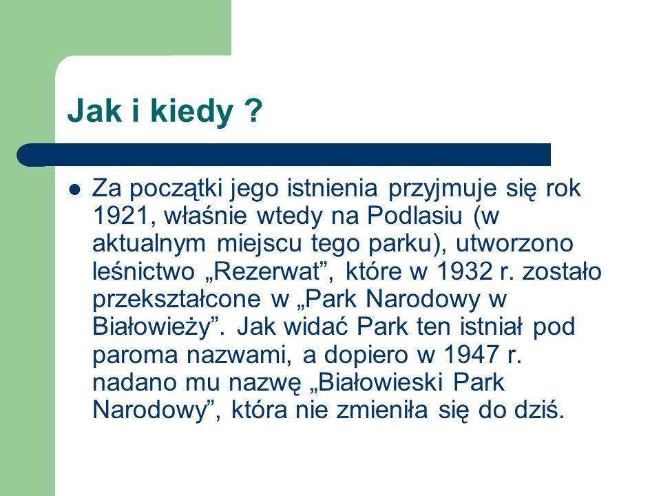 Jak i kiedy ? Za początki jego istnienia przyjmuje się rok 1921, właśnie wtedy na Podlasiu (w aktualnym miejscu tego parku), utworzono leśnictwo Rezer