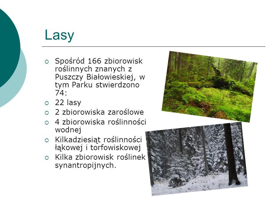 Lasy Spośród 166 zbiorowisk roślinnych znanych z Puszczy Białowieskiej, w tym Parku stwierdzono 74: 22 lasy 2 zbiorowiska zaroślowe 4 zbiorowiska rośl