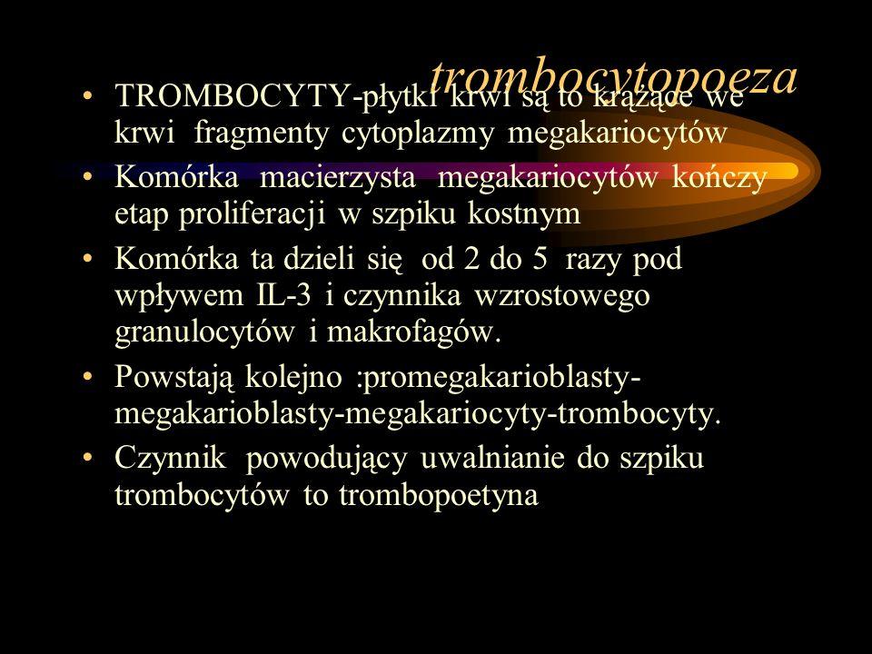 trombocytopoeza TROMBOCYTY-płytki krwi są to krążące we krwi fragmenty cytoplazmy megakariocytów Komórka macierzysta megakariocytów kończy etap prolif