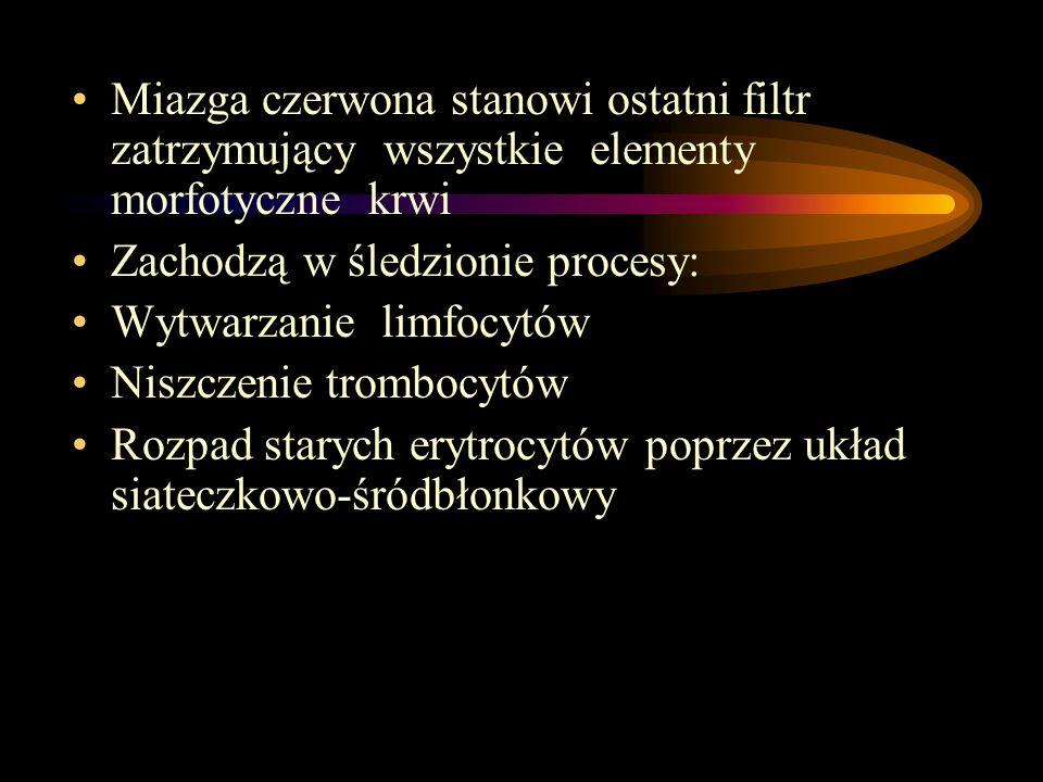 Miazga czerwona stanowi ostatni filtr zatrzymujący wszystkie elementy morfotyczne krwi Zachodzą w śledzionie procesy: Wytwarzanie limfocytów Niszczeni