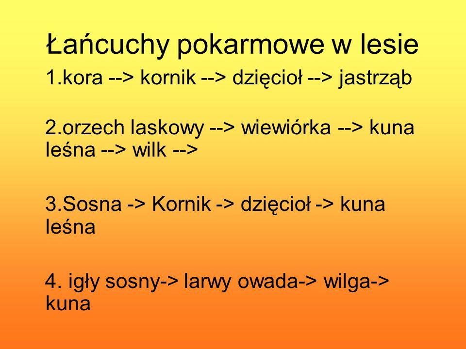 Łańcuchy pokarmowe w lesie 1.kora --> kornik --> dzięcioł --> jastrząb 2.orzech laskowy --> wiewiórka --> kuna leśna --> wilk --> 3.Sosna -> Kornik -> dzięcioł -> kuna leśna 4.