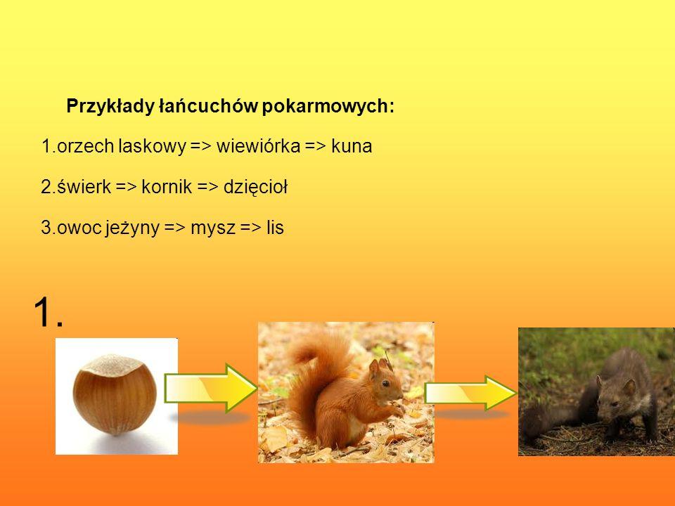 Przykłady łańcuchów pokarmowych: 1.orzech laskowy => wiewiórka => kuna 2.świerk => kornik => dzięcioł 3.owoc jeżyny => mysz => lis 1.