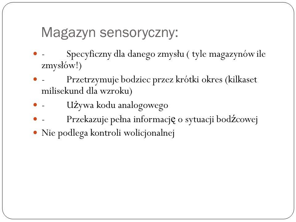 Magazyn sensoryczny: - Specyficzny dla danego zmysłu ( tyle magazynów ile zmysłów!) - Przetrzymuje bodziec przez krótki okres (kilkaset milisekund dla