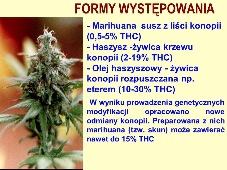 FORMY WYSTĘPOWANIA - Marihuana susz z liści konopii (0,5-5% THC) - Haszysz -żywica krzewu konopii (2-19% THC) - Olej haszyszowy - żywica konopii rozpu