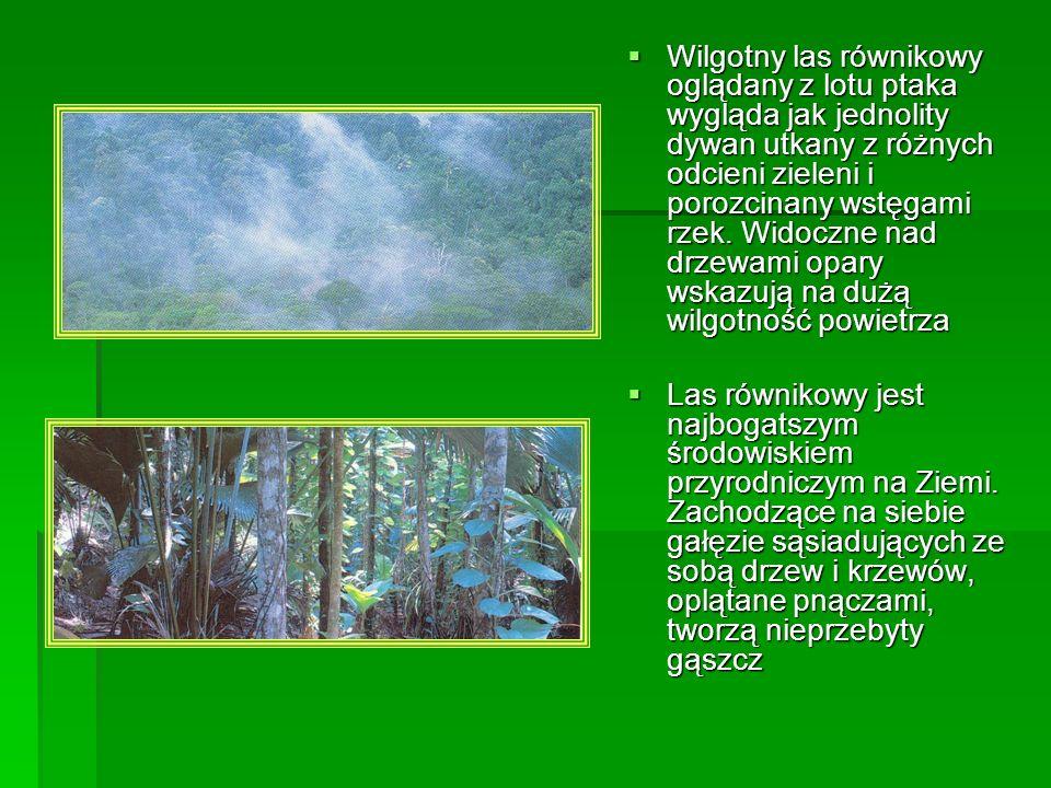 Wilgotny las równikowy oglądany z lotu ptaka wygląda jak jednolity dywan utkany z różnych odcieni zieleni i porozcinany wstęgami rzek. Widoczne nad dr