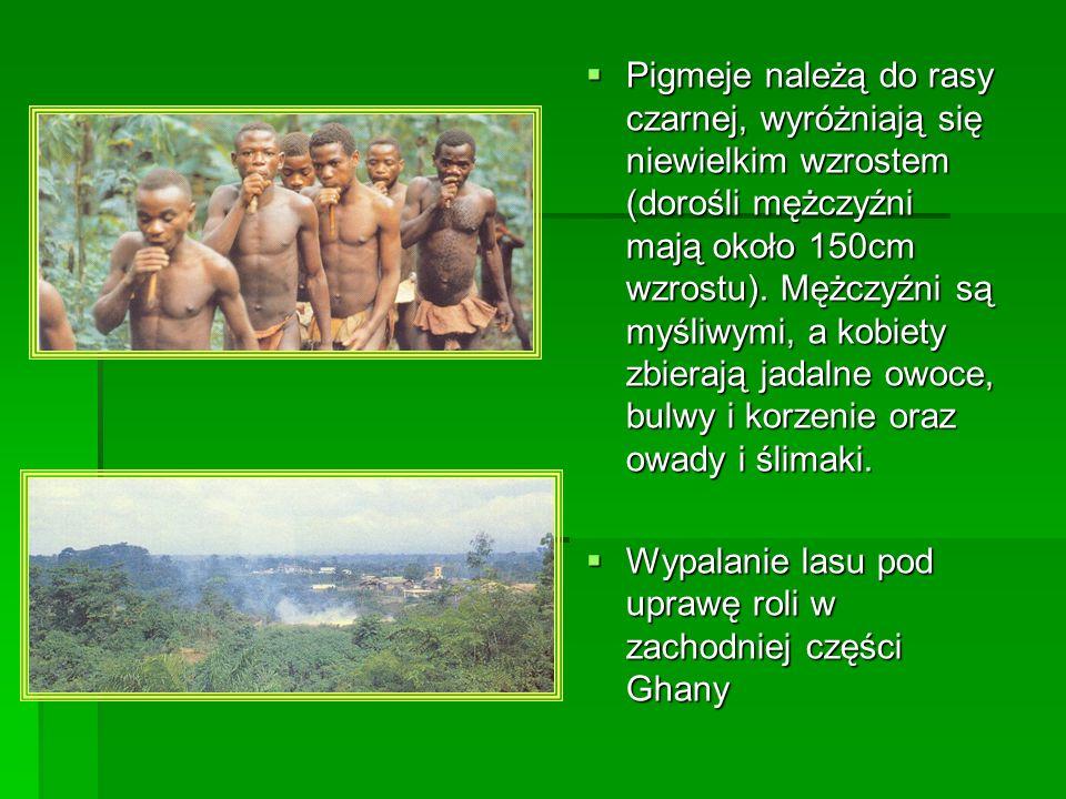 Pigmeje należą do rasy czarnej, wyróżniają się niewielkim wzrostem (dorośli mężczyźni mają około 150cm wzrostu). Mężczyźni są myśliwymi, a kobiety zbi