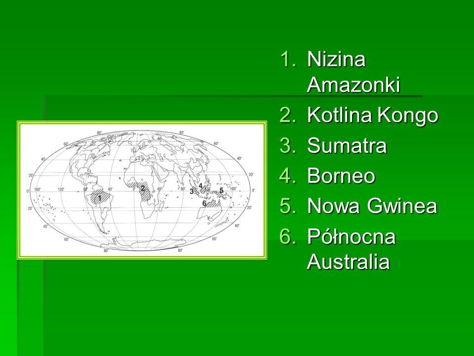 1.Nizina Amazonki 2.Kotlina Kongo 3.Sumatra 4.Borneo 5.Nowa Gwinea 6.Północna Australia