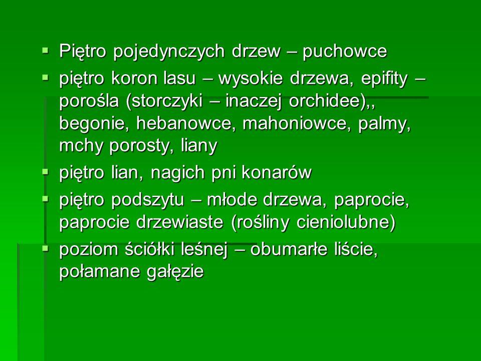 a.Słoń b.Hipopotam c.Małpa d.Krokodyl termity, chrząszcze, pająki, owady, węże, papugi, jaszczurki, żaby Storczyki (orchidee), ozdoby z kości słoniowej, obuwie torebki, paski i portfele ze skóry krokodyla, mahoniowe i hebanowe meble Storczyki (orchidee), ozdoby z kości słoniowej, obuwie torebki, paski i portfele ze skóry krokodyla, mahoniowe i hebanowe meble