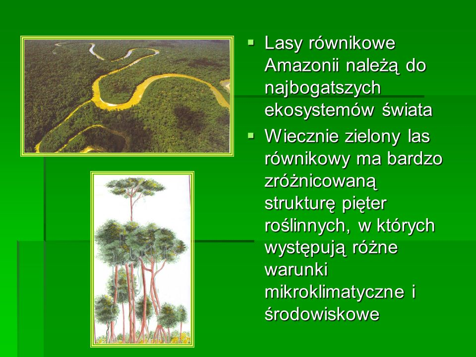 Lasy równikowe Amazonii należą do najbogatszych ekosystemów świata Lasy równikowe Amazonii należą do najbogatszych ekosystemów świata Wiecznie zielony