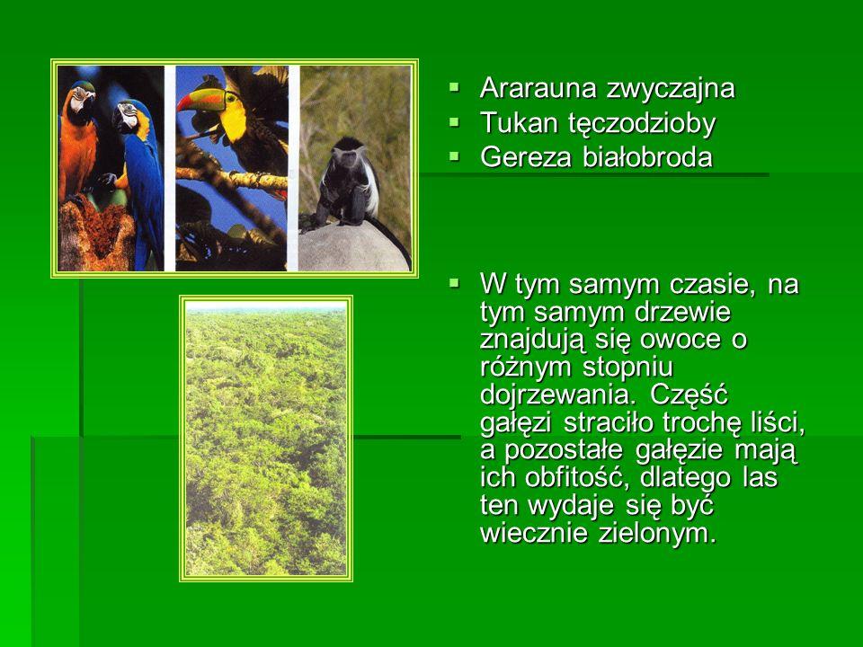 W koronach drzew rozwijają się liczne gatunki lian, wypuszczające korzenie powietrzne, szybko rosnące ku dołowi, które po pewnym czasie wrastają w grunt.
