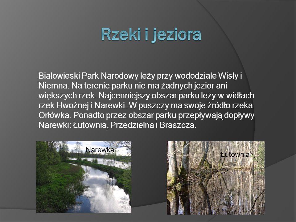 Białowieski Park Narodowy leży przy wododziale Wisły i Niemna.
