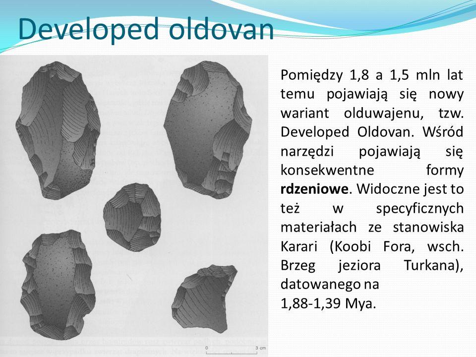 Developed oldovan Pomiędzy 1,8 a 1,5 mln lat temu pojawiają się nowy wariant olduwajenu, tzw. Developed Oldovan. Wśród narzędzi pojawiają się konsekwe