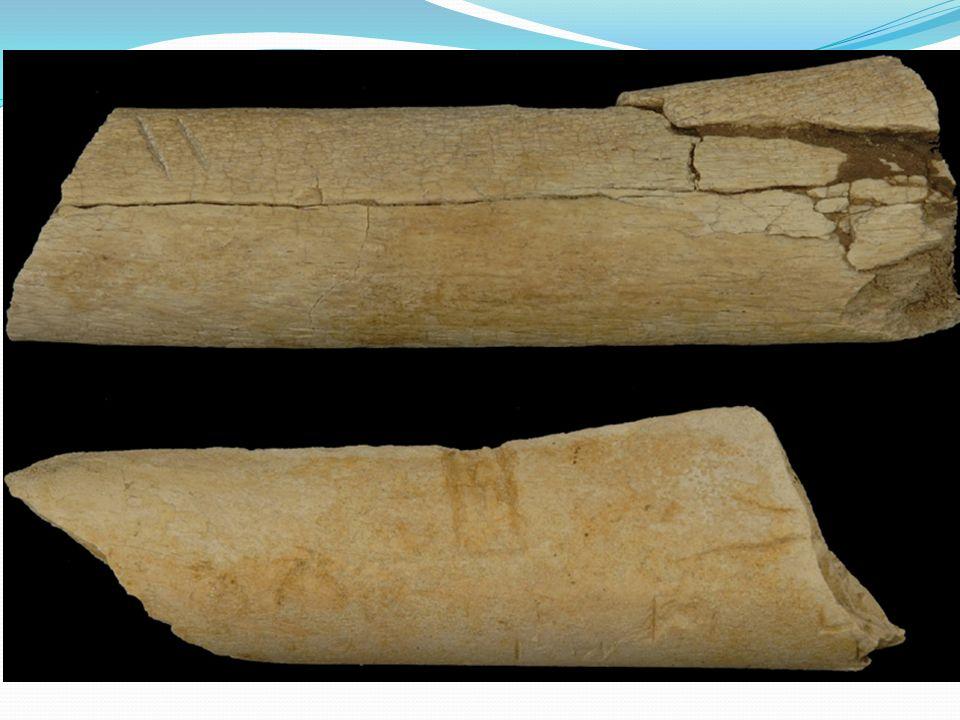 2,6 mln lat mają nastarsze znalezione narzędzia kamienne (Kada Gona, Etiopia), ale ślady ich używania sięgają nawet 3,4 mln lat (Afar). Od tego moment