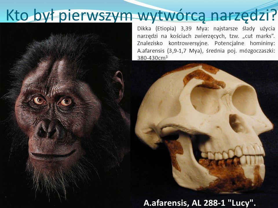 Kto był pierwszym wytwórcą narzędzi? ? Dikka (Etiopia) 3,39 Mya: najstarsze ślady użycia narzędzi na kościach zwierzęcych, tzw. cut marks. Znalezisko