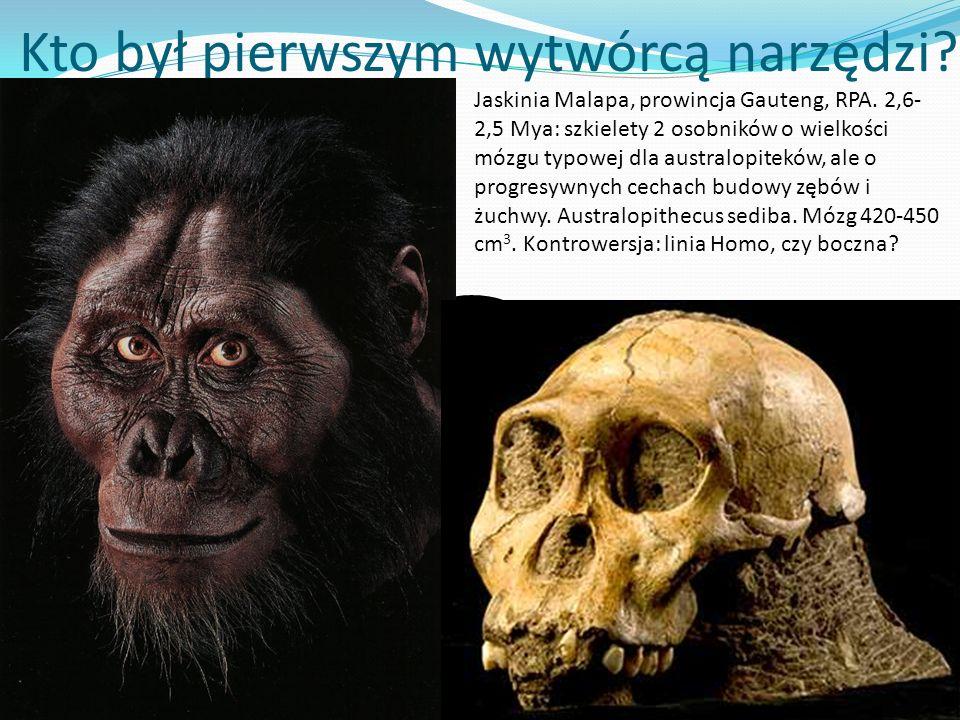 Kto był pierwszym wytwórcą narzędzi? ? Jaskinia Malapa, prowincja Gauteng, RPA. 2,6- 2,5 Mya: szkielety 2 osobników o wielkości mózgu typowej dla aust