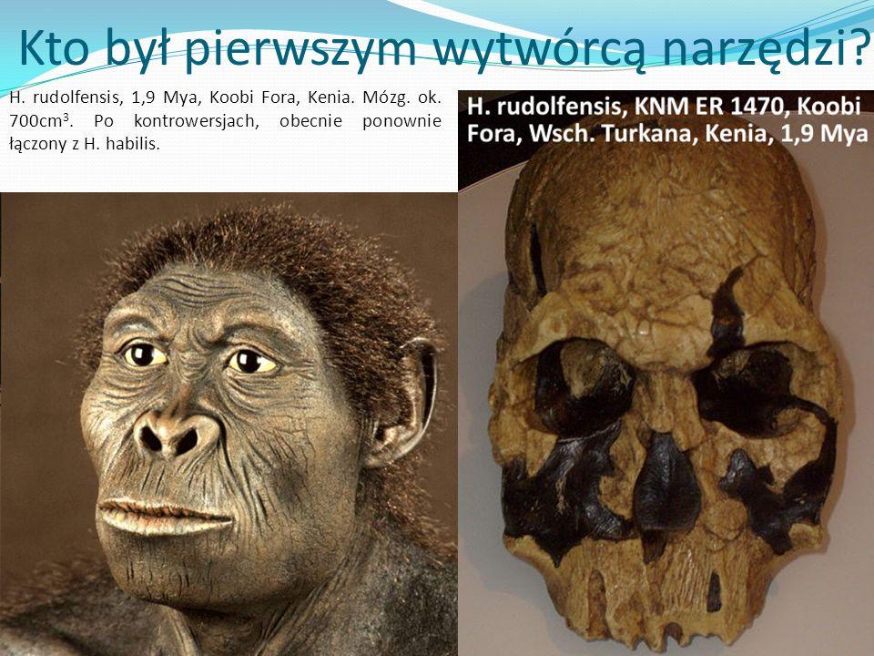 ? Kto był pierwszym wytwórcą narzędzi? H. rudolfensis, 1,9 Mya, Koobi Fora, Kenia. Mózg. ok. 700cm 3. Po kontrowersjach, obecnie ponownie łączony z H.
